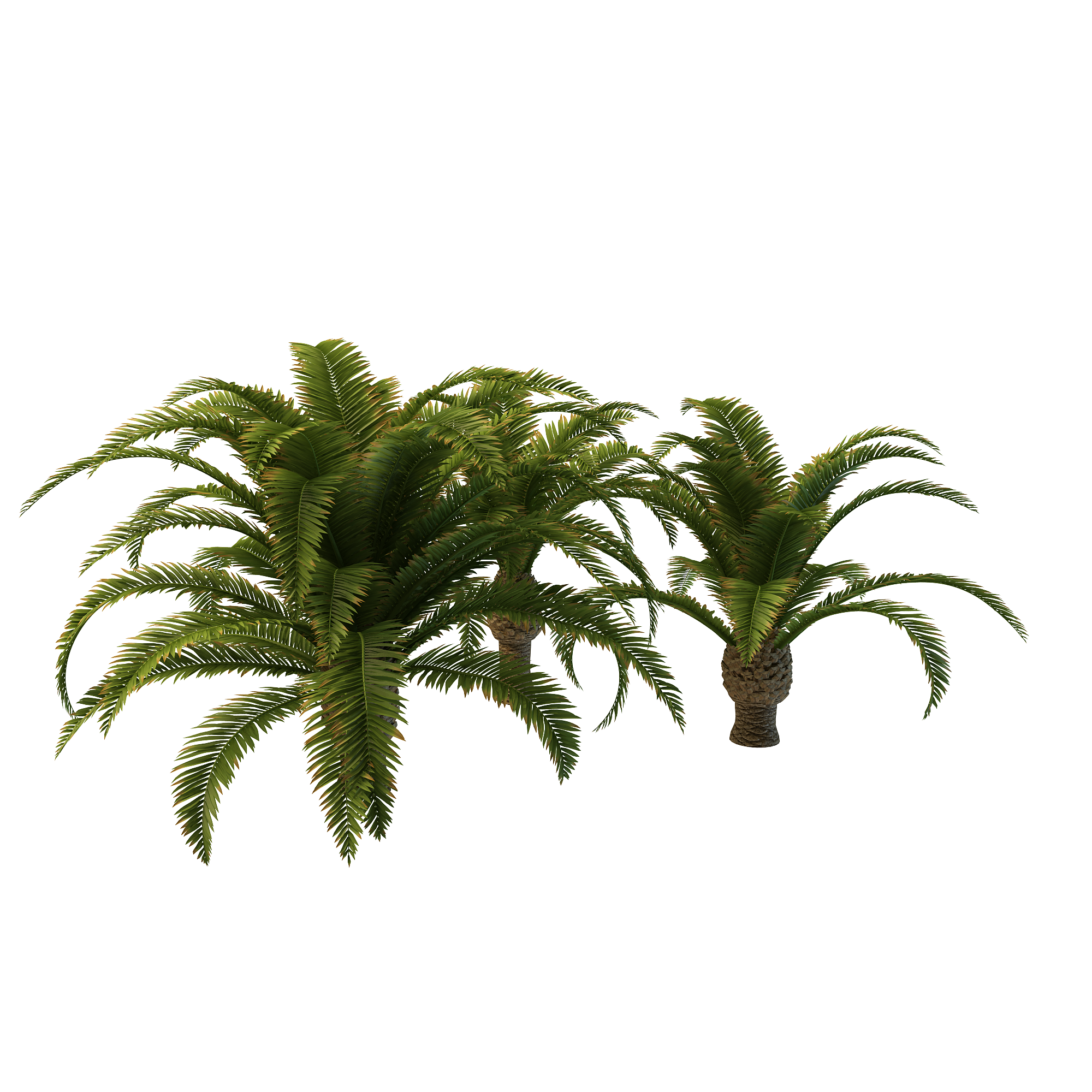 Small palm tree png. Long clipart free icons
