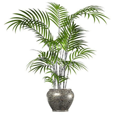 Small palm tree png. Transparent images free donwload