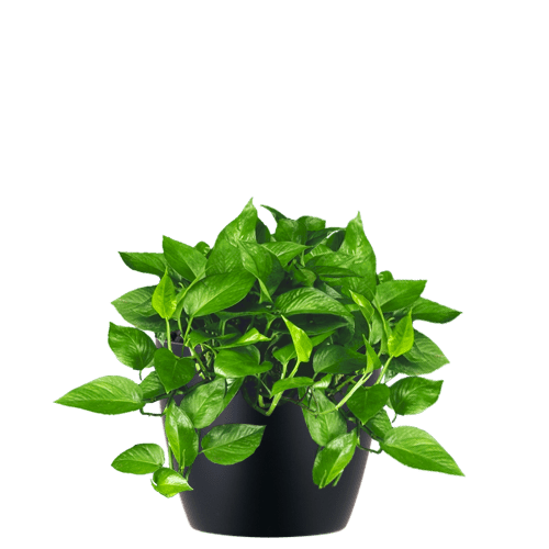 Small plant png. Office plants and gardens