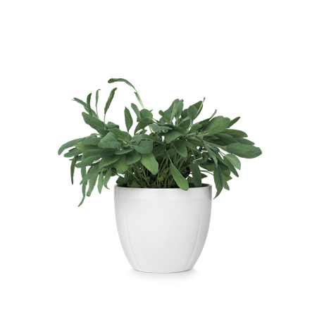 Small plant png. Flower pot transparent images