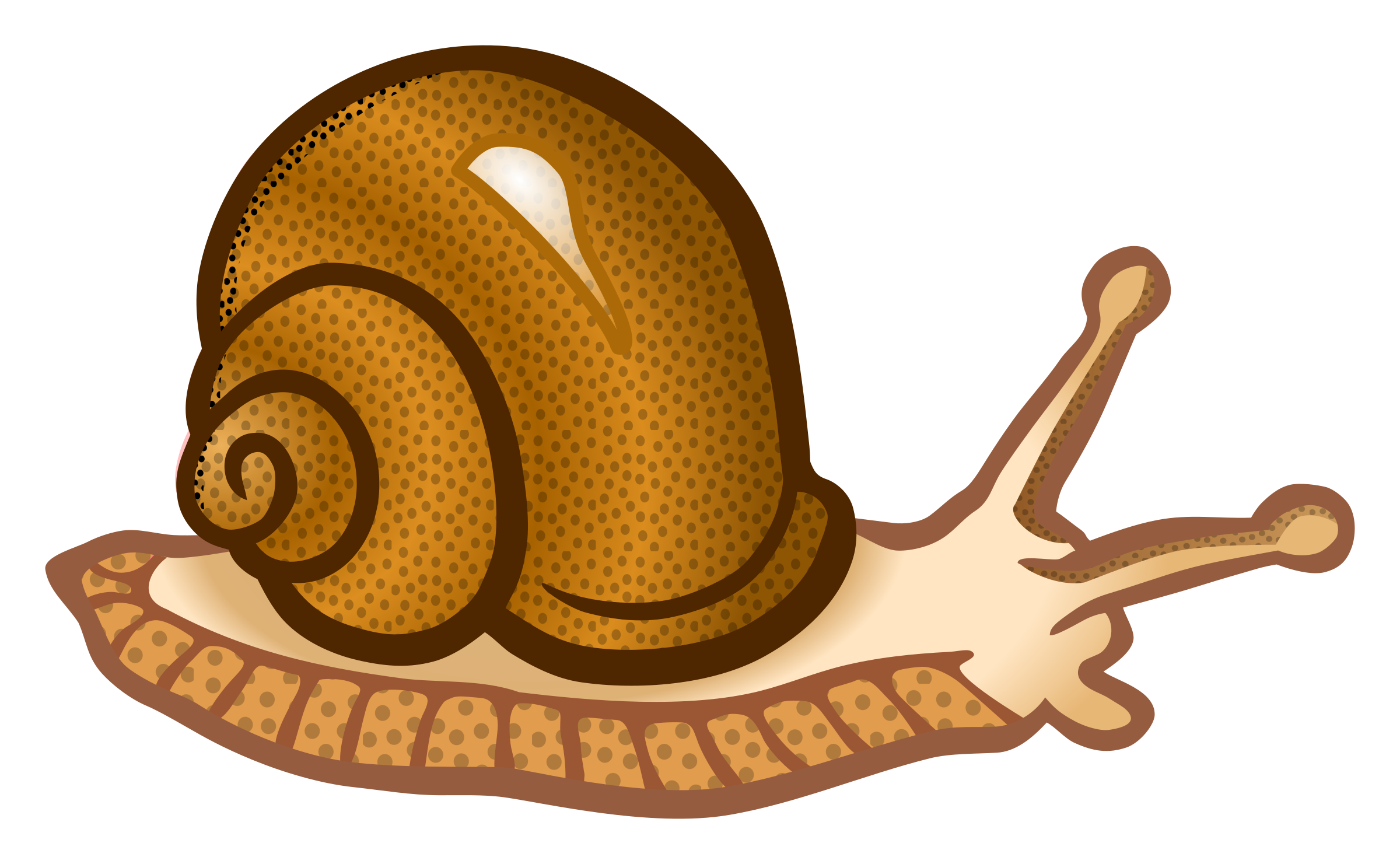 Snail clip art png. Coloured icons free and