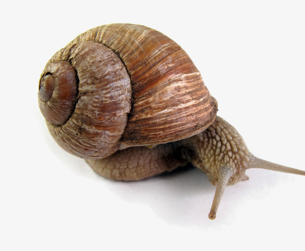 Snail clipart old. Creative snails crawling png