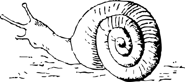 Snail drawing png. Clip art at clker