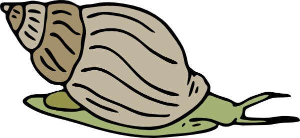 Snail graphic vector png. Green clip art at
