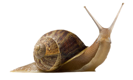 Snail png. Transparent images all pic