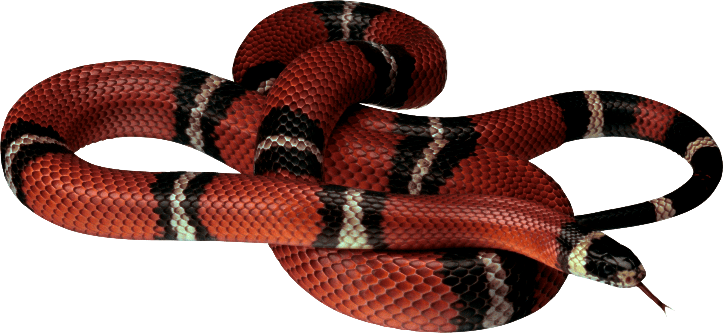 Snake gucci png. Wallpapers wallpaper cave image