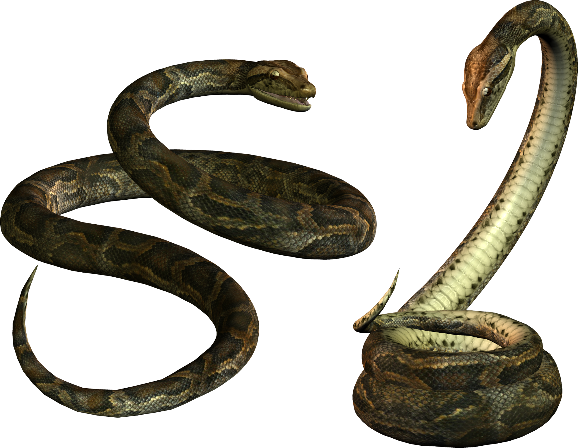 Snake .png. Transparent png pictures free