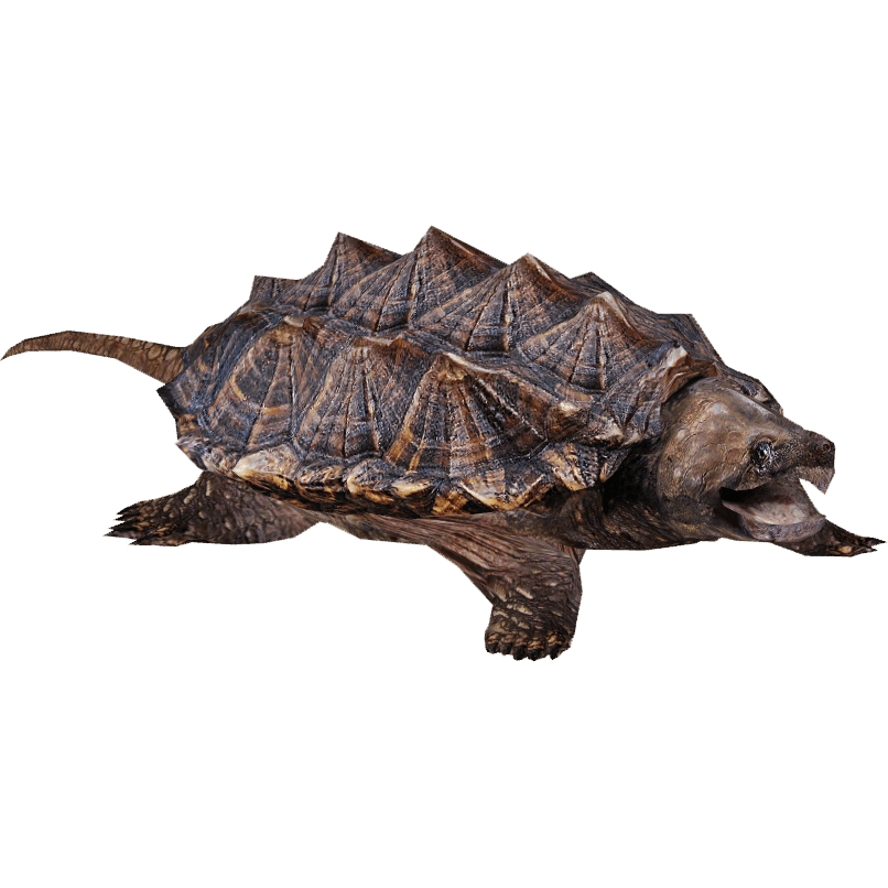 Snapping turtle png. Transparent stickpng