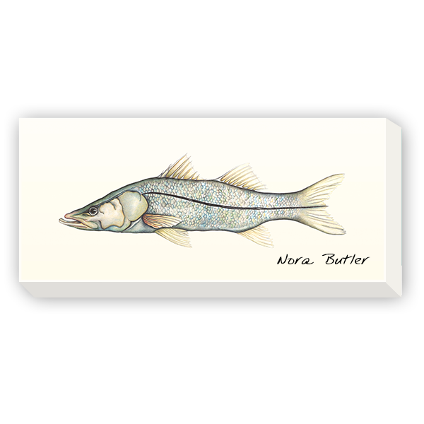 Snook drawing pencil. Sir fish pinterest canvases