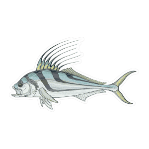 Snook drawing redfish. Typeface sticker fly fishing