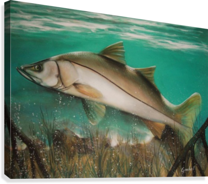 Snook drawing underwater. Bill gimbel canvas print