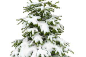 Snow trees png. Covered image related wallpapers