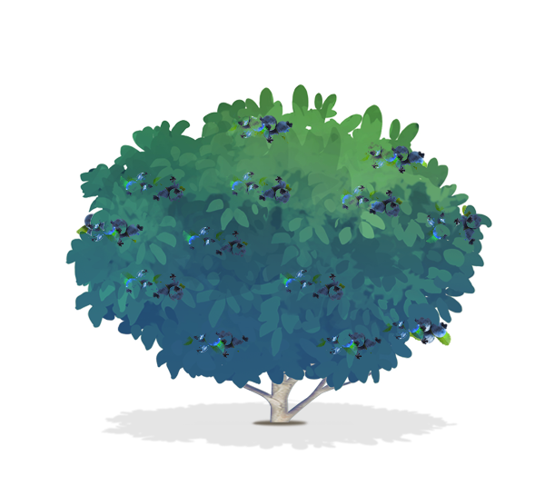 snowball bush png