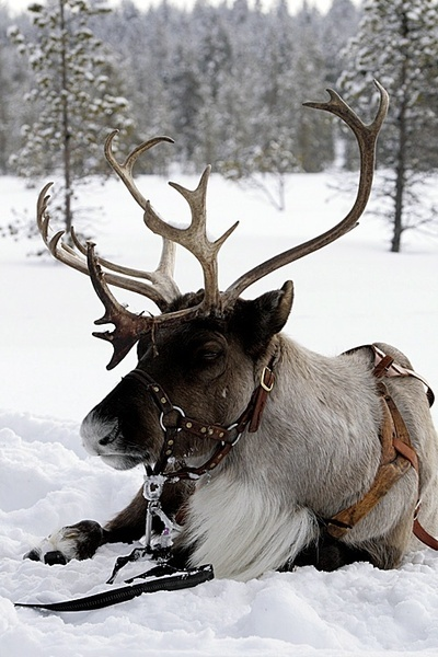 Snowmobile clipart grandma got run over by reindeer. Best images on