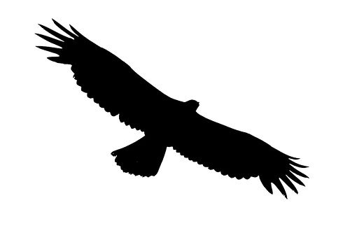 Soaring clipart outline. Eagle best jewelry tutorial