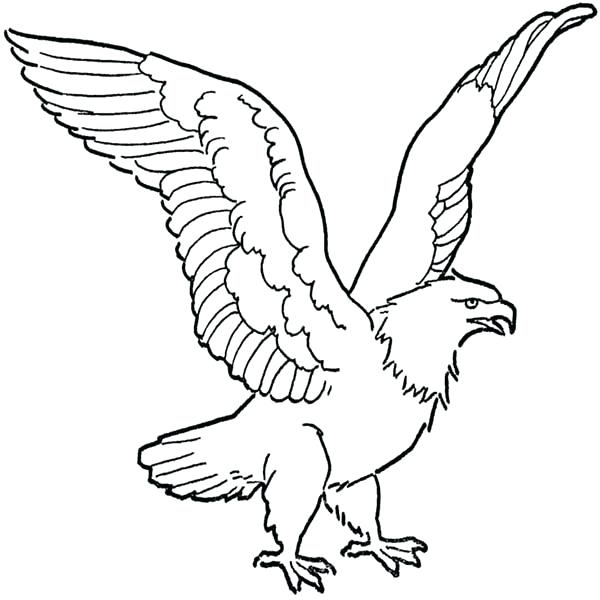 Soaring clipart outline. Bald eagle drawing coloring