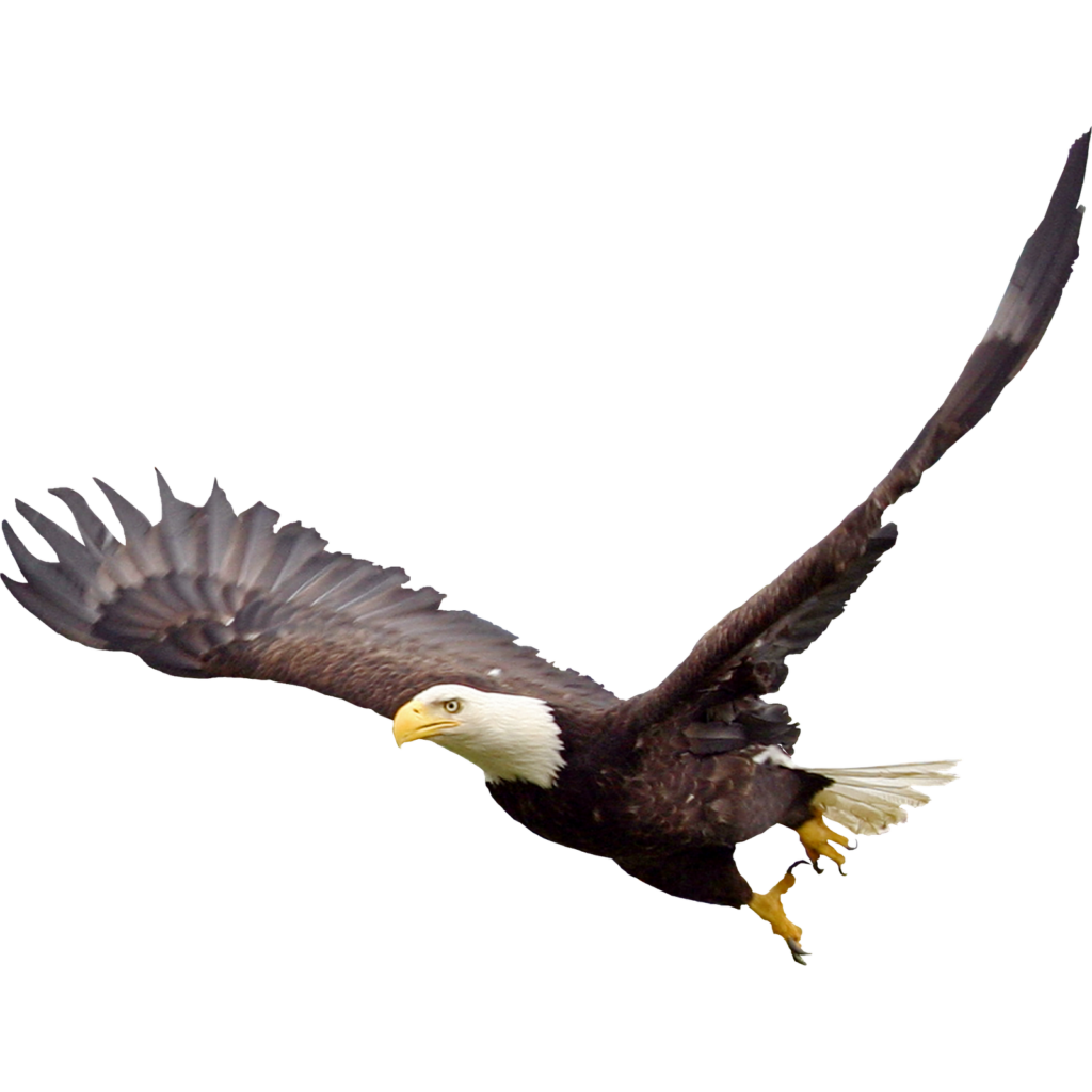 File vector eagle. Soaring png clipart psd