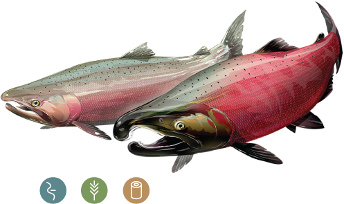 Sockeye salmon png. Coho california trout inc