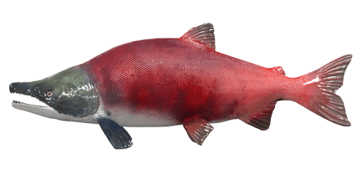 Sockeye salmon png. Fishing planet unofficial wiki