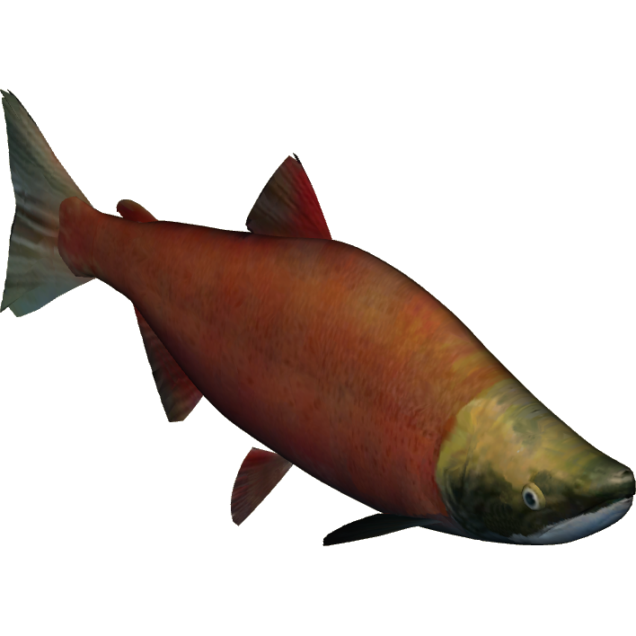 Sockeye salmon png. Theridk zt download library