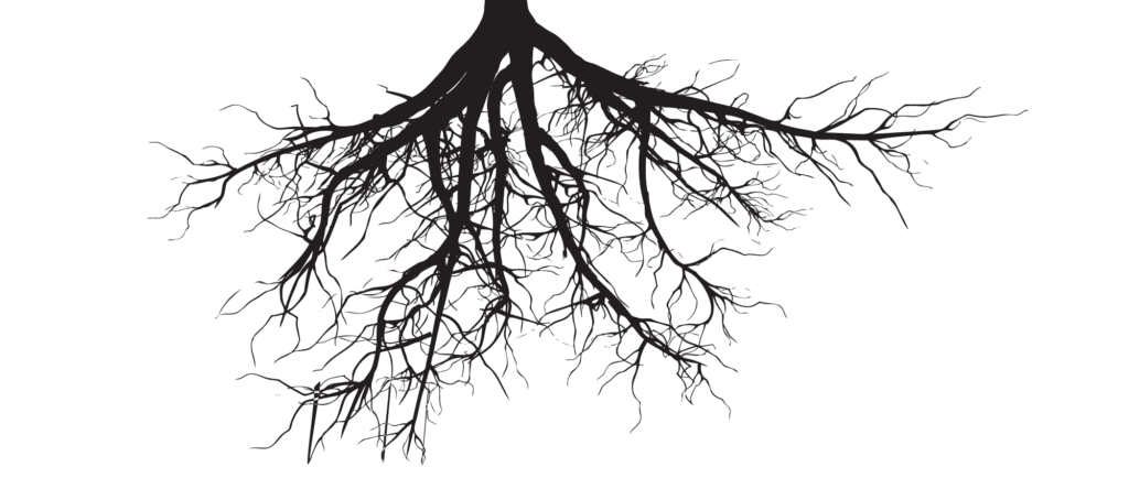 Soil and roots png. X drawings of trees