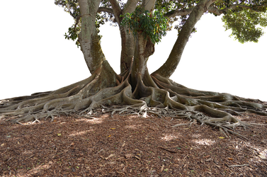 Tree and soil png. S bush roots vines
