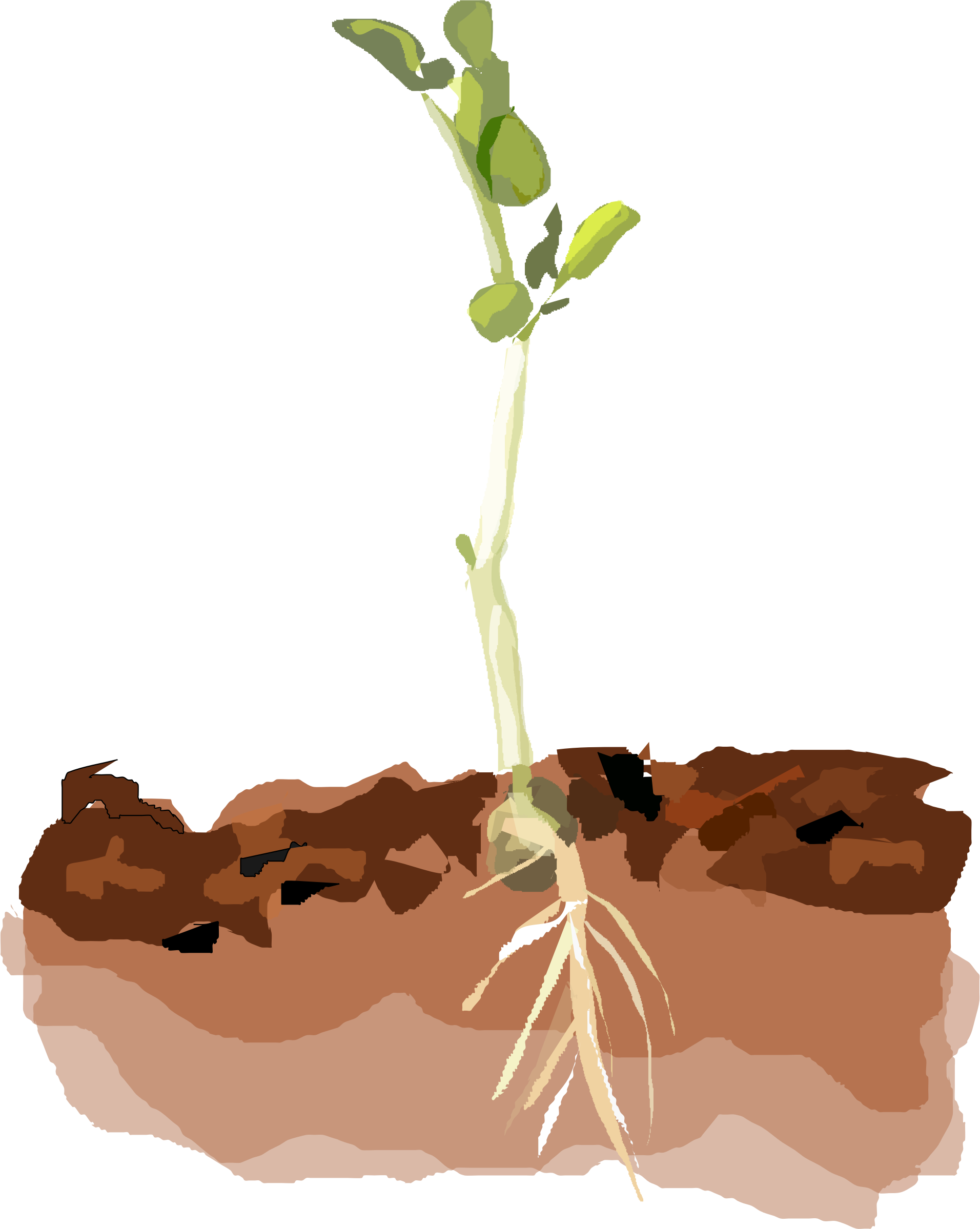 Soil and roots png. Clipart sprouting pea big