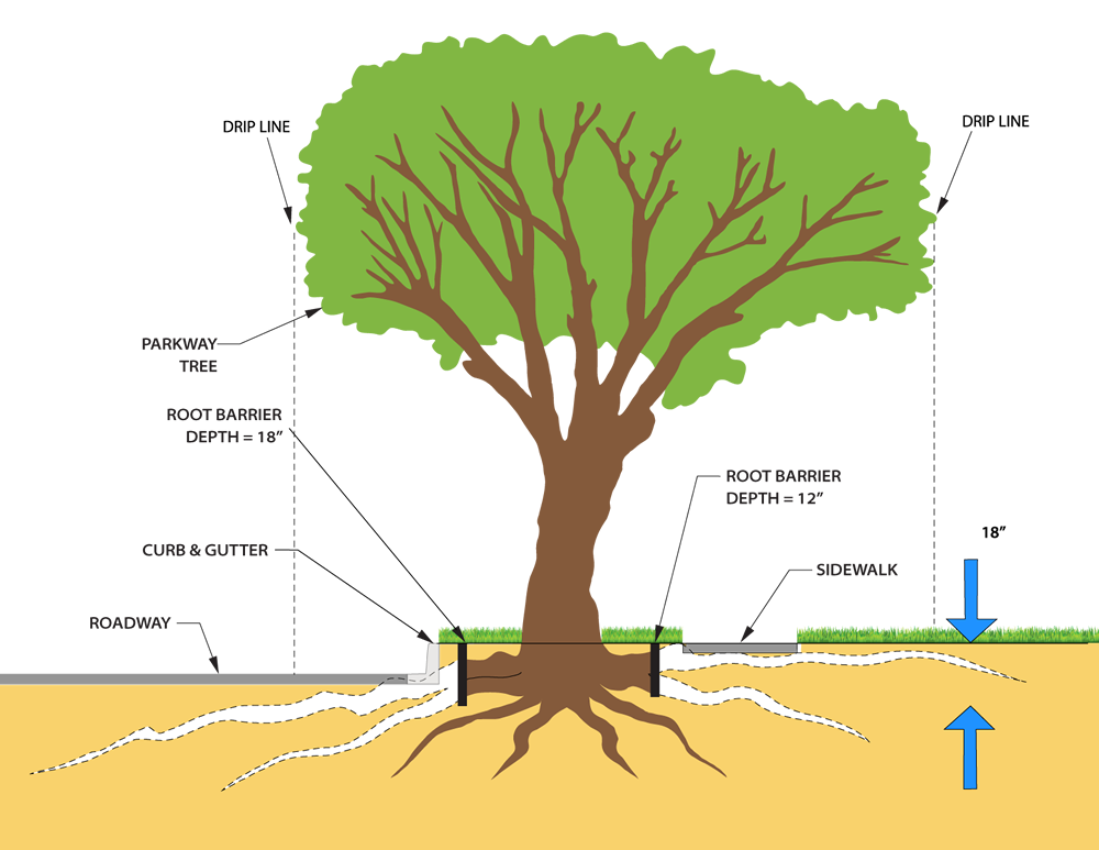 Soil and roots png. Read about root