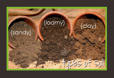 Soil clipart loamy soil. Perfect vegetables quality cookstown