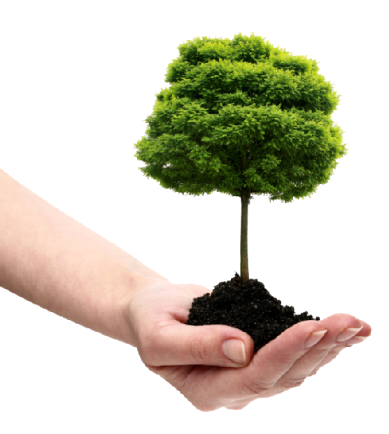 Tree and soil png. Save transparent images all