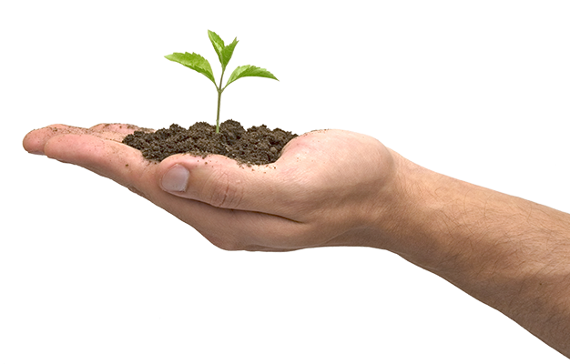 Tree and soil png. Hands transparent pictures free