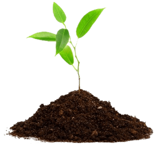 Soil transparent png. Leaves on ground stickpng