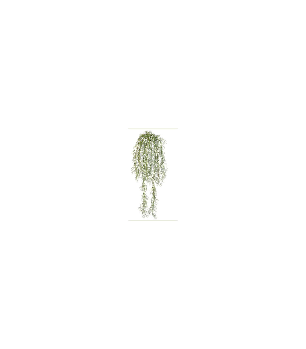 Spanish moss png. Buy online on sale