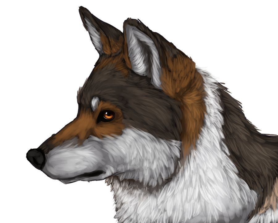 Speedpaint drawing winged wolf. Mexican by xkaharu on