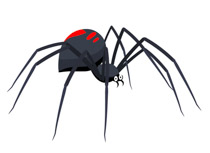 Spider clipart carton. Free clip art pictures