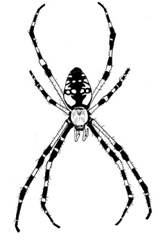 Spiders clipart. Realistic for personal commercial