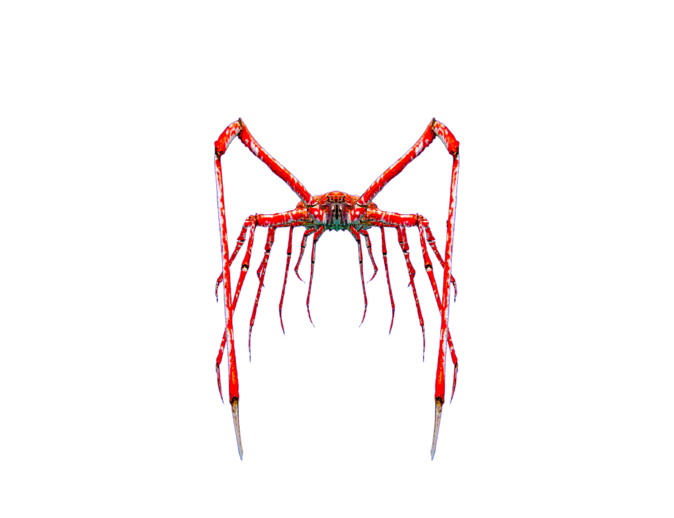 Spider crab png. Mysoti gus giant mutant