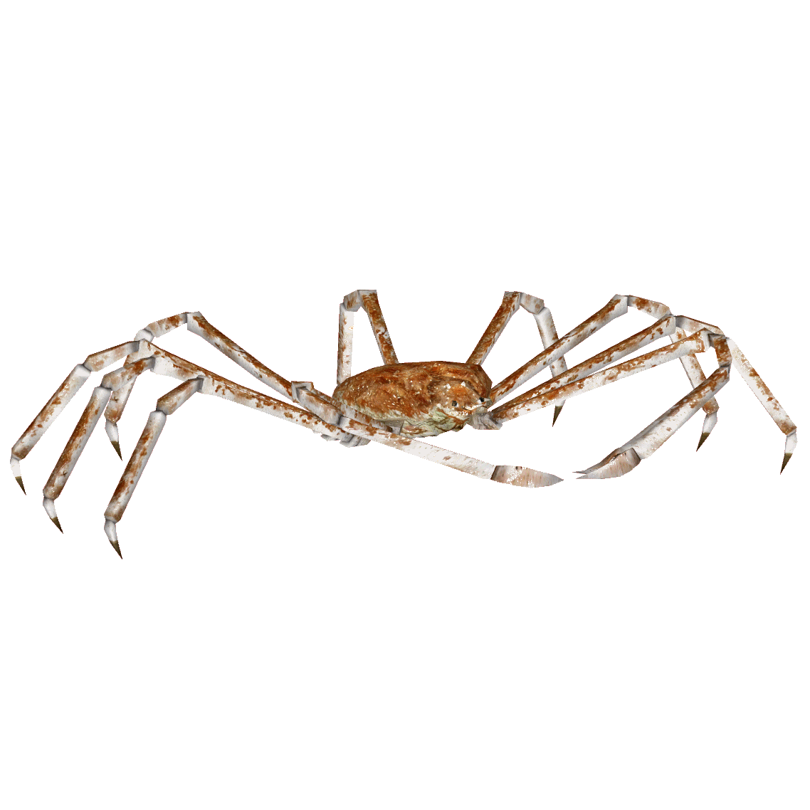 Spider crab png. Japanese hendrix zt download