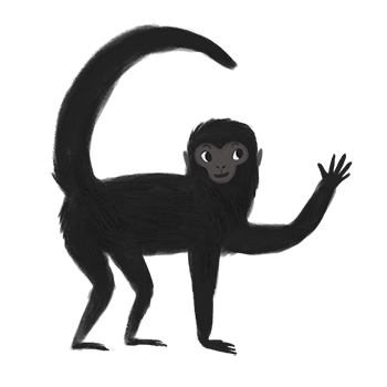 Spider monkey png. Sticker place stickers and