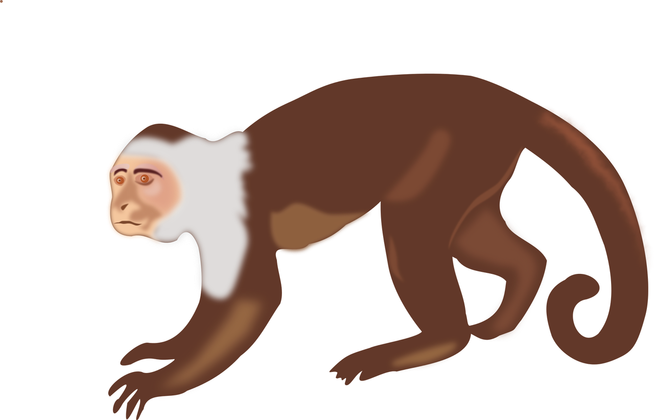 Spider monkey png. Capuchin white headed brown