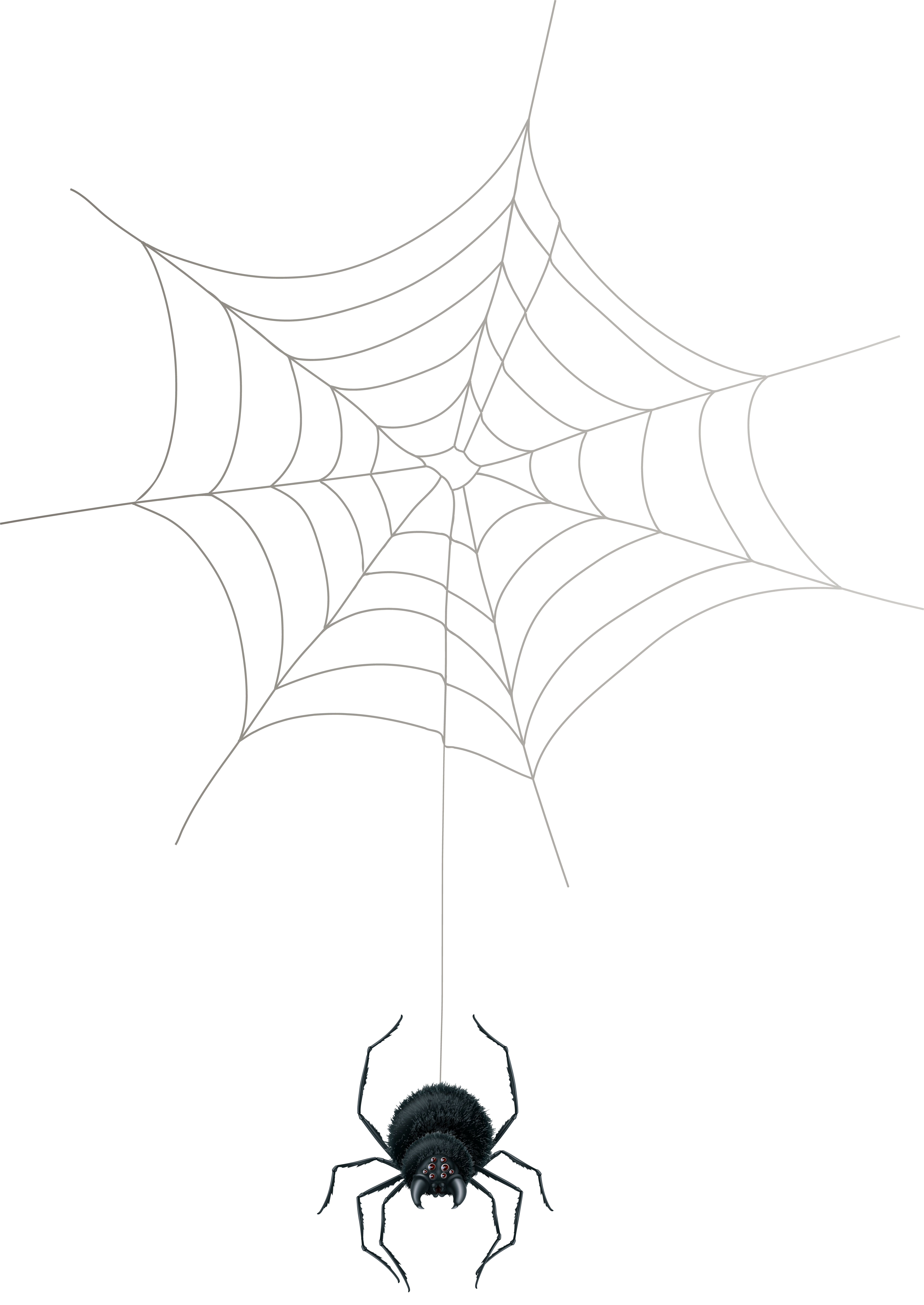 Spider web border png. Clip art gallery yopriceville