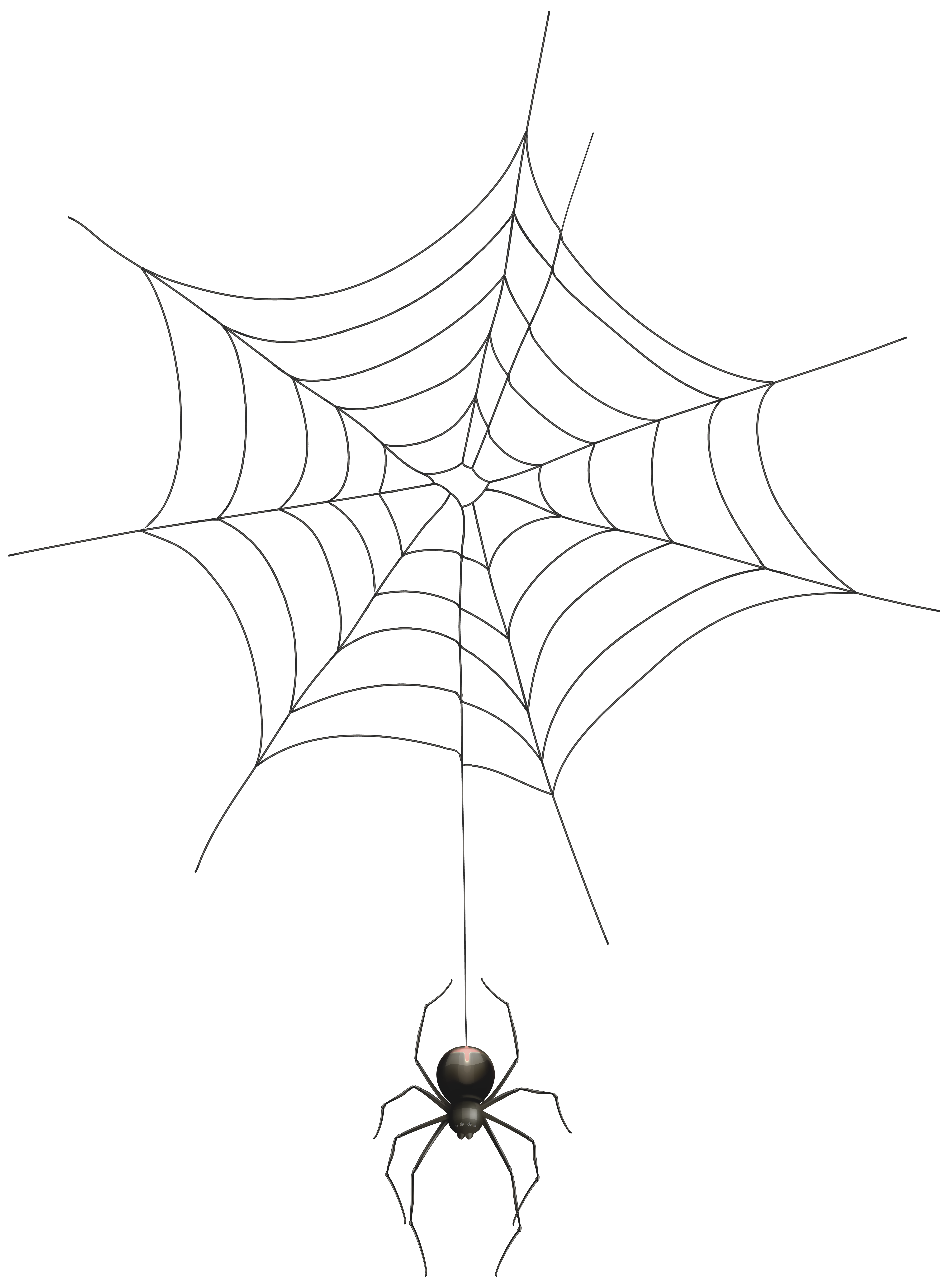 Realistic spider web png. And transparent clip art