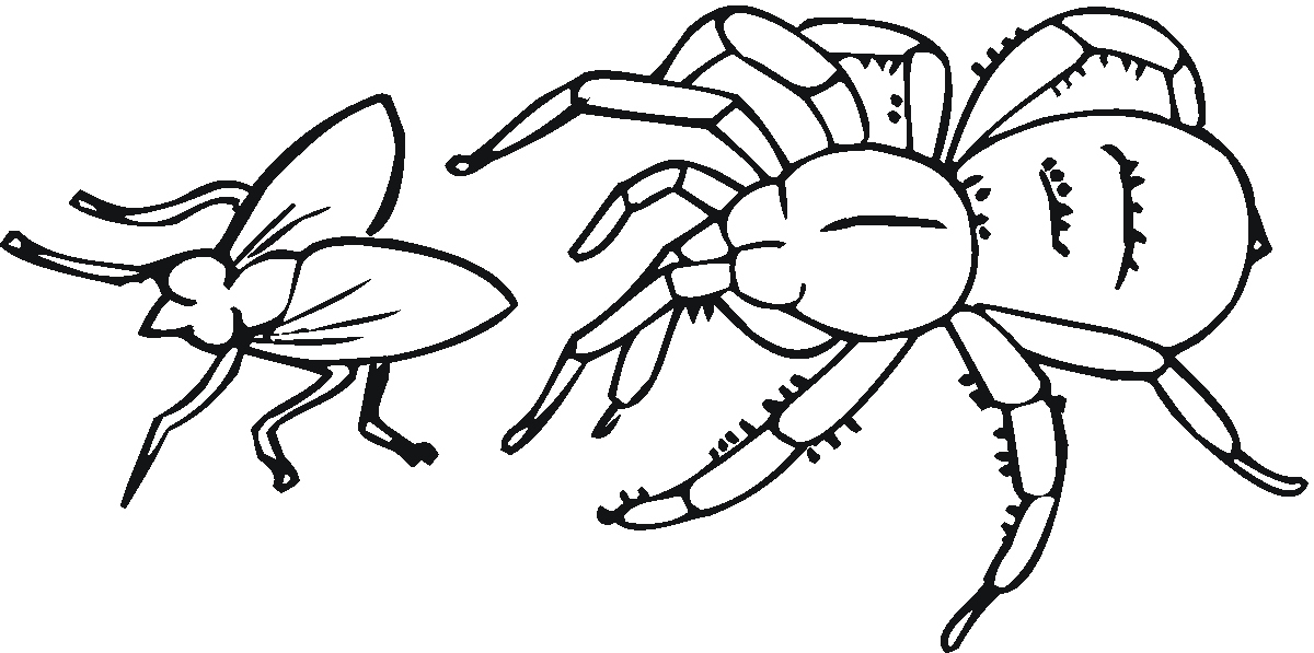 Spiders Clipart Coloring Page Picture 235886 Spiders Clipart