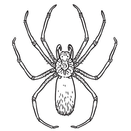 Spiders drawing wolf spider. Aptive environmental