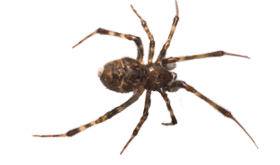 Spiders drawing wolf spider. Get rid of and