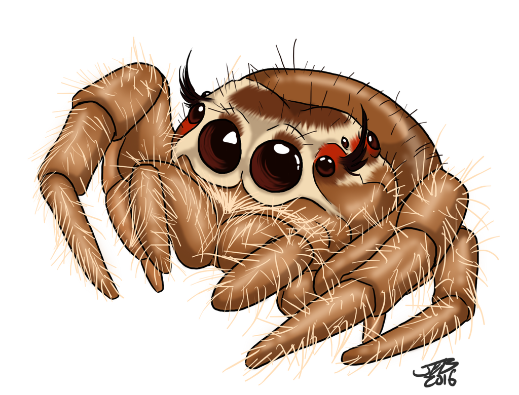 Spiders drawing kawaii. Cute jumping spider by
