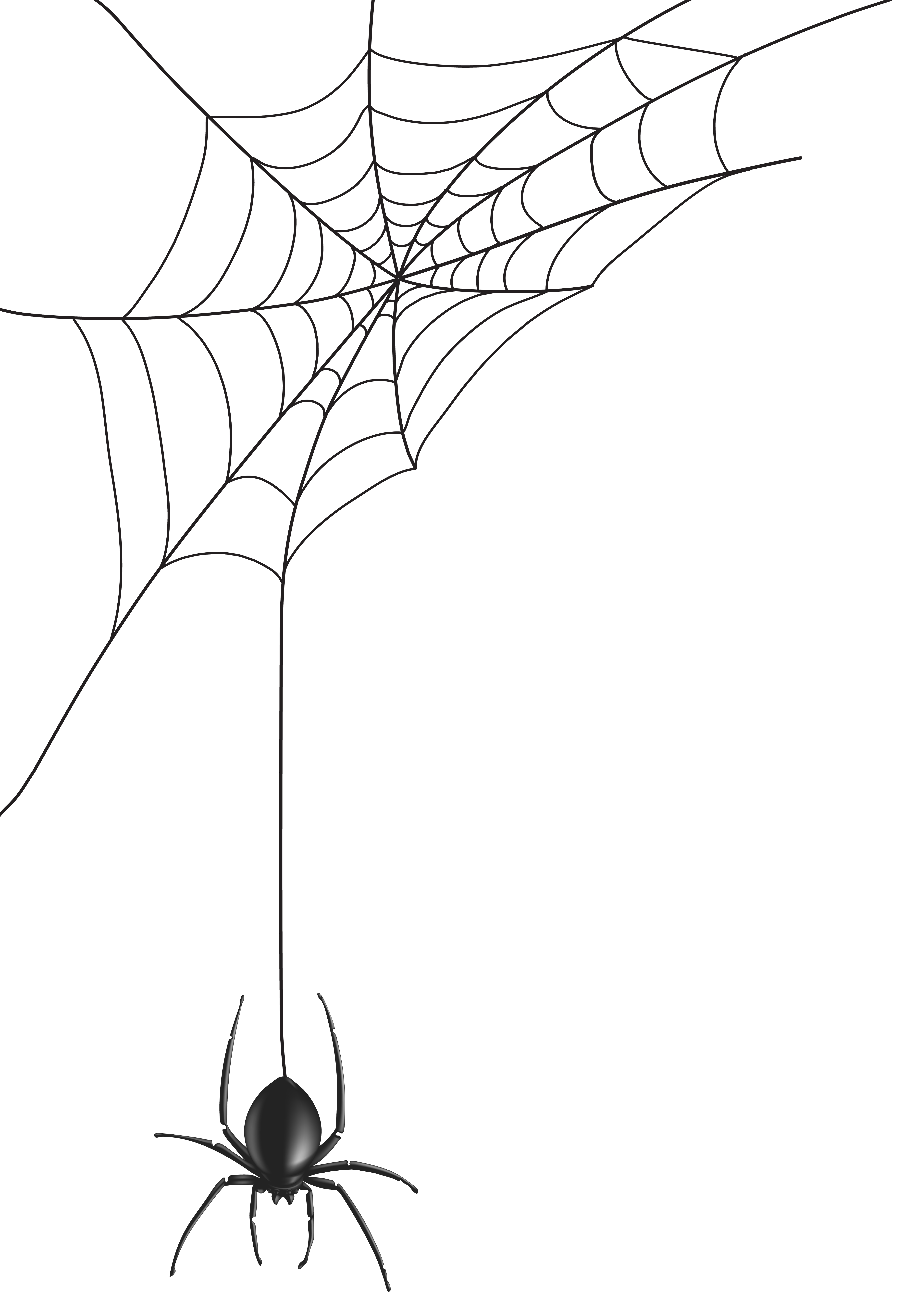 Halloween png spider web
