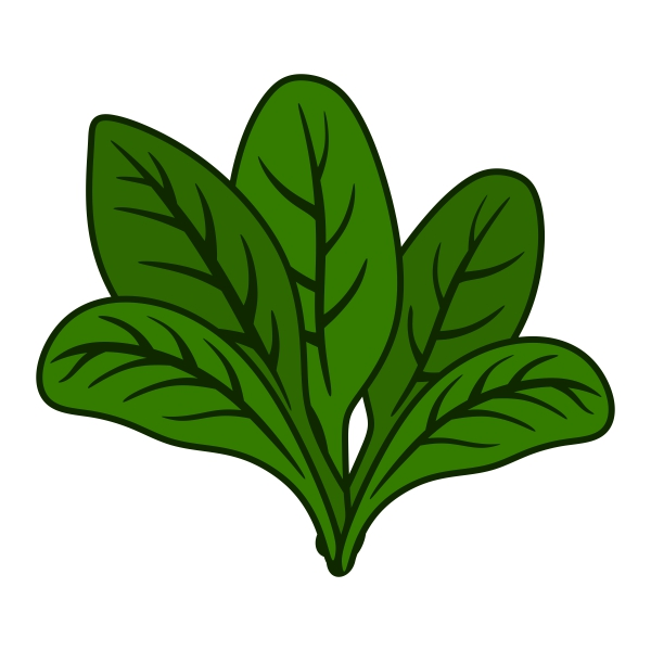 Spinach clipart. Station jpg clipartix