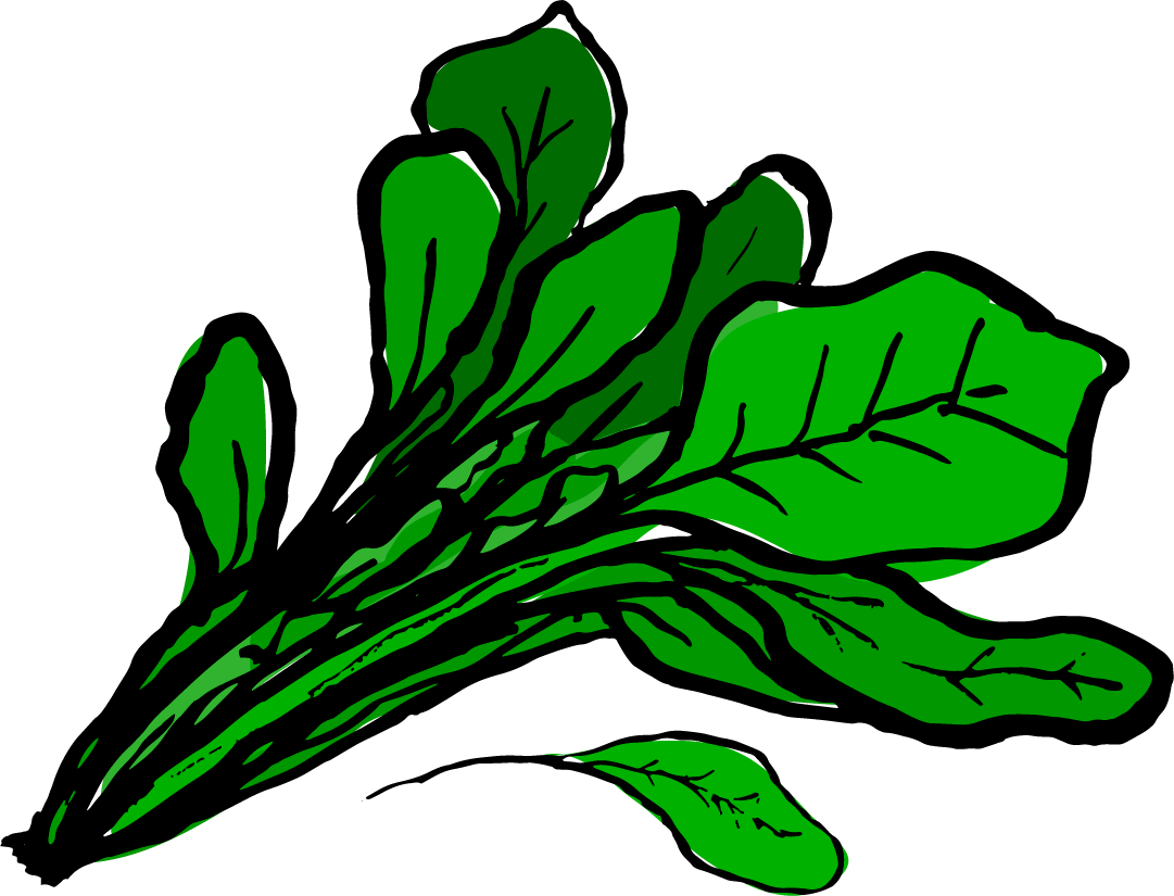 spinach clipart watercress