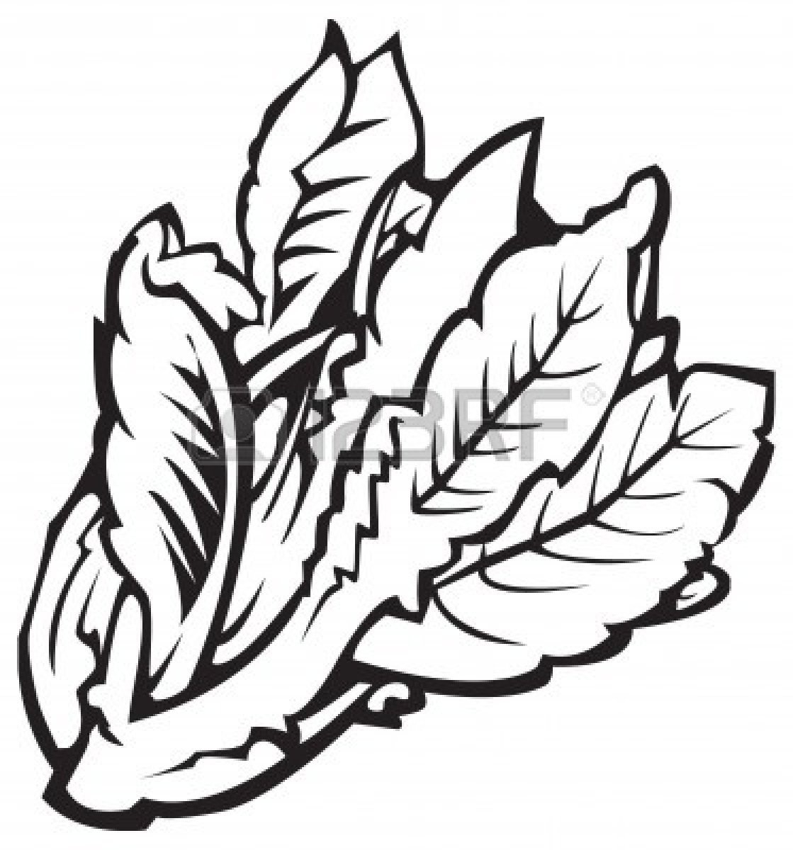 Spinach clipart black and white. Letters example throughout